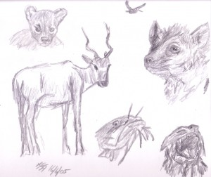 Animals at the Zoo. Sketch by Katherine FitzHywel