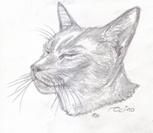 Cappuccino FitzHywel - Sketch by Katherine FitzHywel