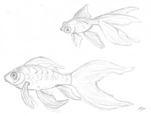 Goldfish - Sketch by Katherine FitzHywel