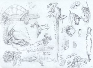 Animals at the Zoo - Sketch by Katherine FitzHywel